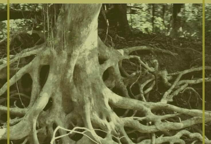 destroy-the-roots-of-shame-based-living-not-enough