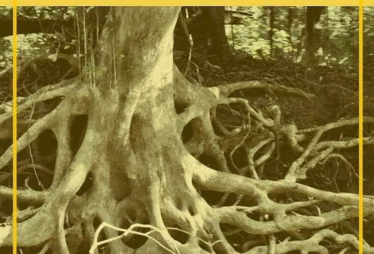 destroy-the-roots-of-shame-based-living-unlovable
