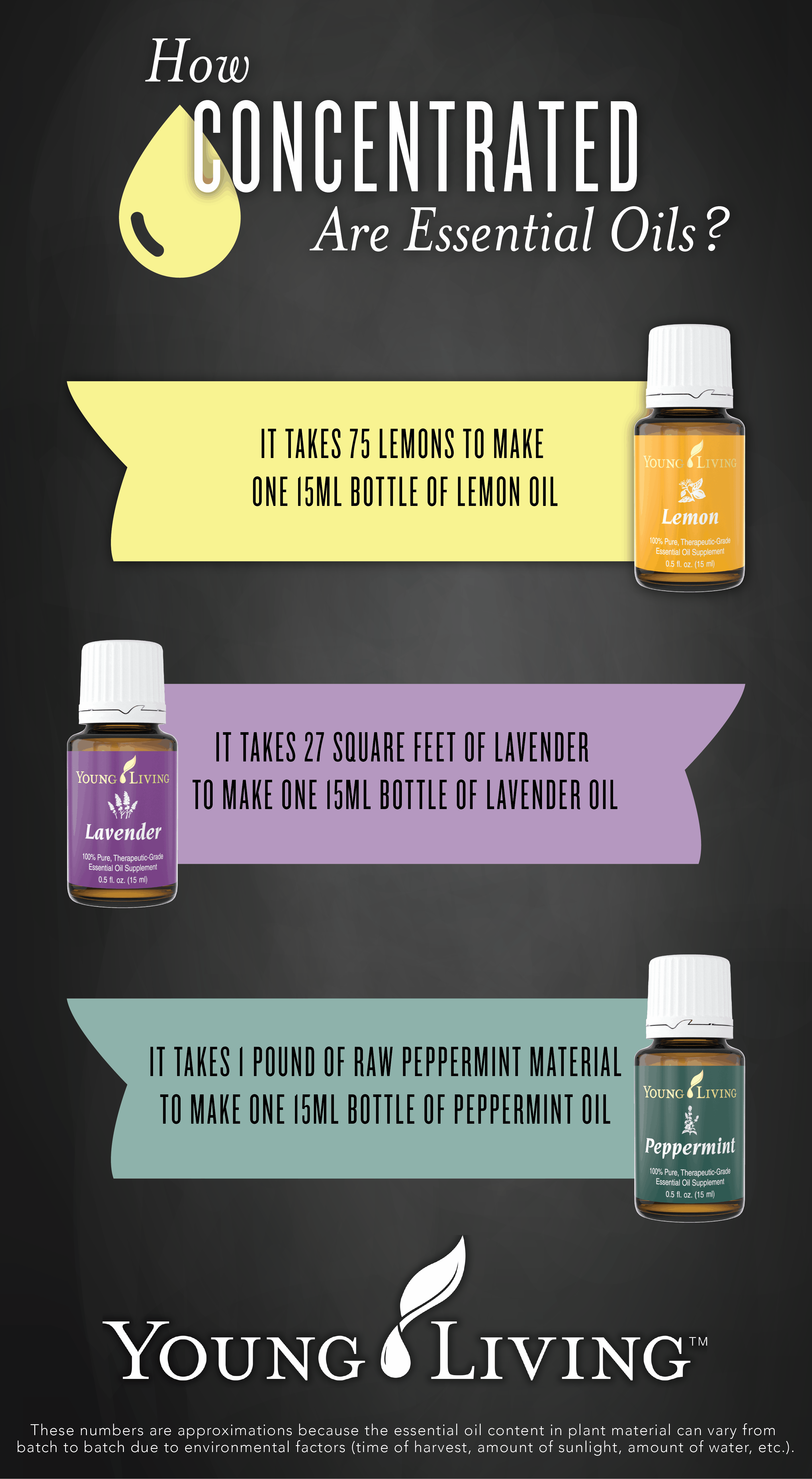 concentrated-oils-interesting-facts-infographic